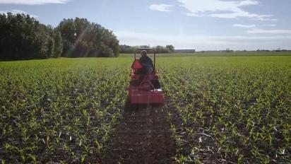 Anthem - The Corn Maze